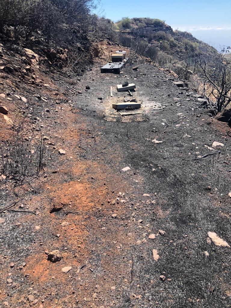 Colmenas afectadas por el incendio